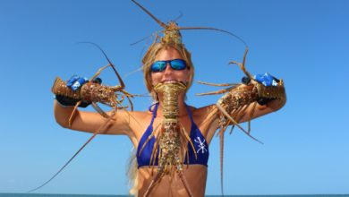 Photo of Florida Lobster: HOW TO Catch, Clean & Cook!