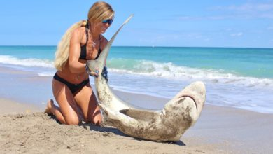 Photo of Your Daily Dose of Darcizzle