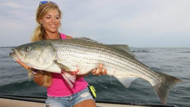 Photo of Essential SECRETS to Catching Giant STRIPED BASS in 30 Mins!