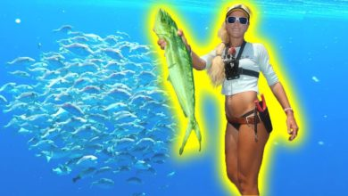 Photo of Offshore Mahi Fishing! We Found a Giant Underwater BAIT BALL