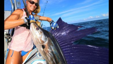 Photo of MIRACLE CATCH! We Should Have NEVER Caught this Massive SAILFISH!