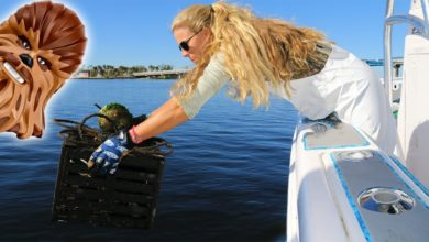 Photo of BEST DAY OF CRABBING EVER! Feat. Chewbacca from STAR WARS!