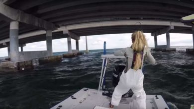Photo of MONSTER WAVES vs. GIRL vs. TARPON vs. HAMMERHEAD SHARK…who wins?