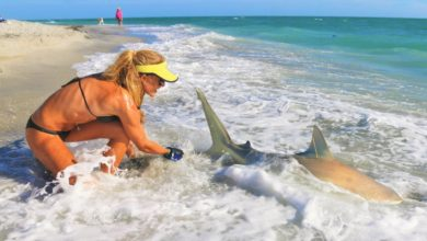 Photo of Girls SHARK FISHING with ELLIOT SUDAL the Shark Wrangler!