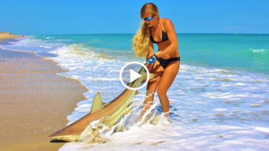 Photo of How to Catch Sharks Fishing from the Beach with tips and tricks